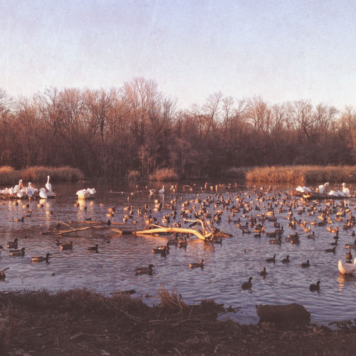ducks-whiterock-lake